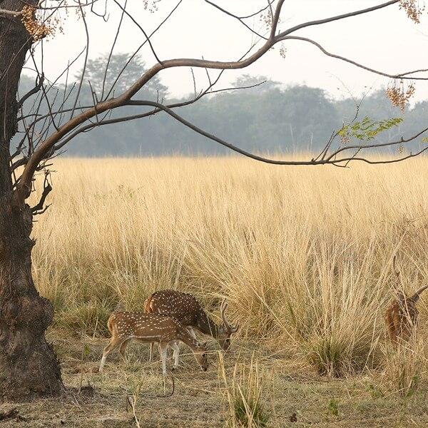 wildlife in corbett